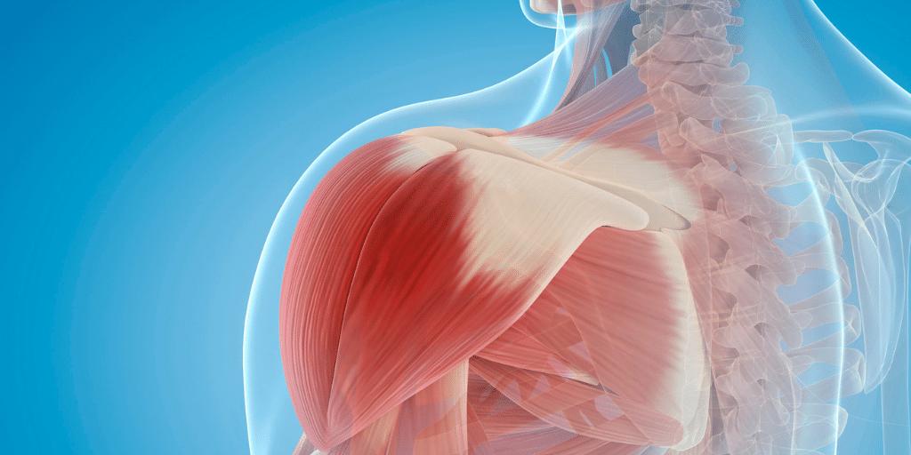 Welche Muskeln braucht man beim Paddeln surf